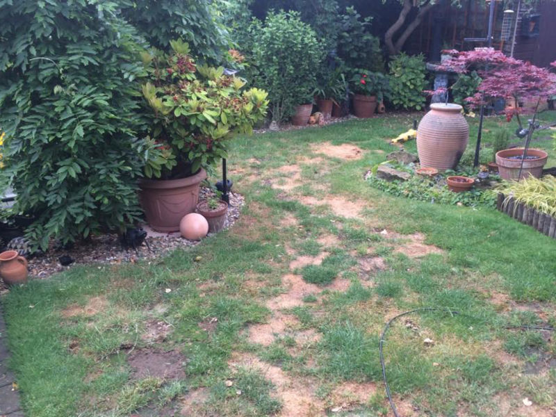 Dog-Ruined-Lawn