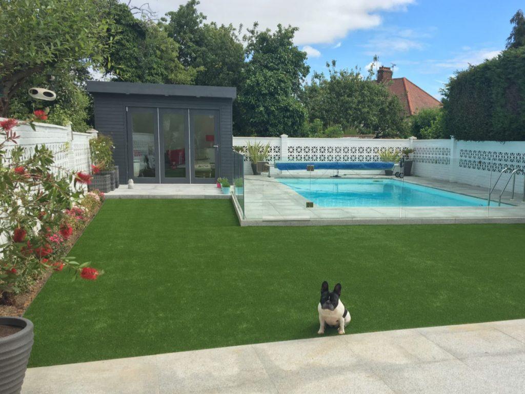 Dog-sitting-on-fake-grass