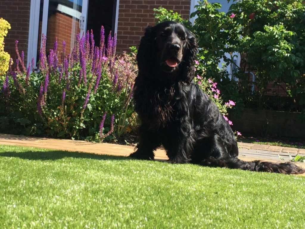 Dog-sitting-on-artificial-grass